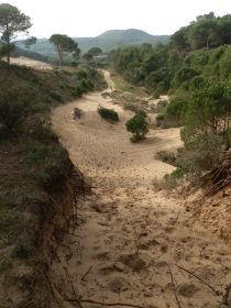 Dune path between Pals and Begur